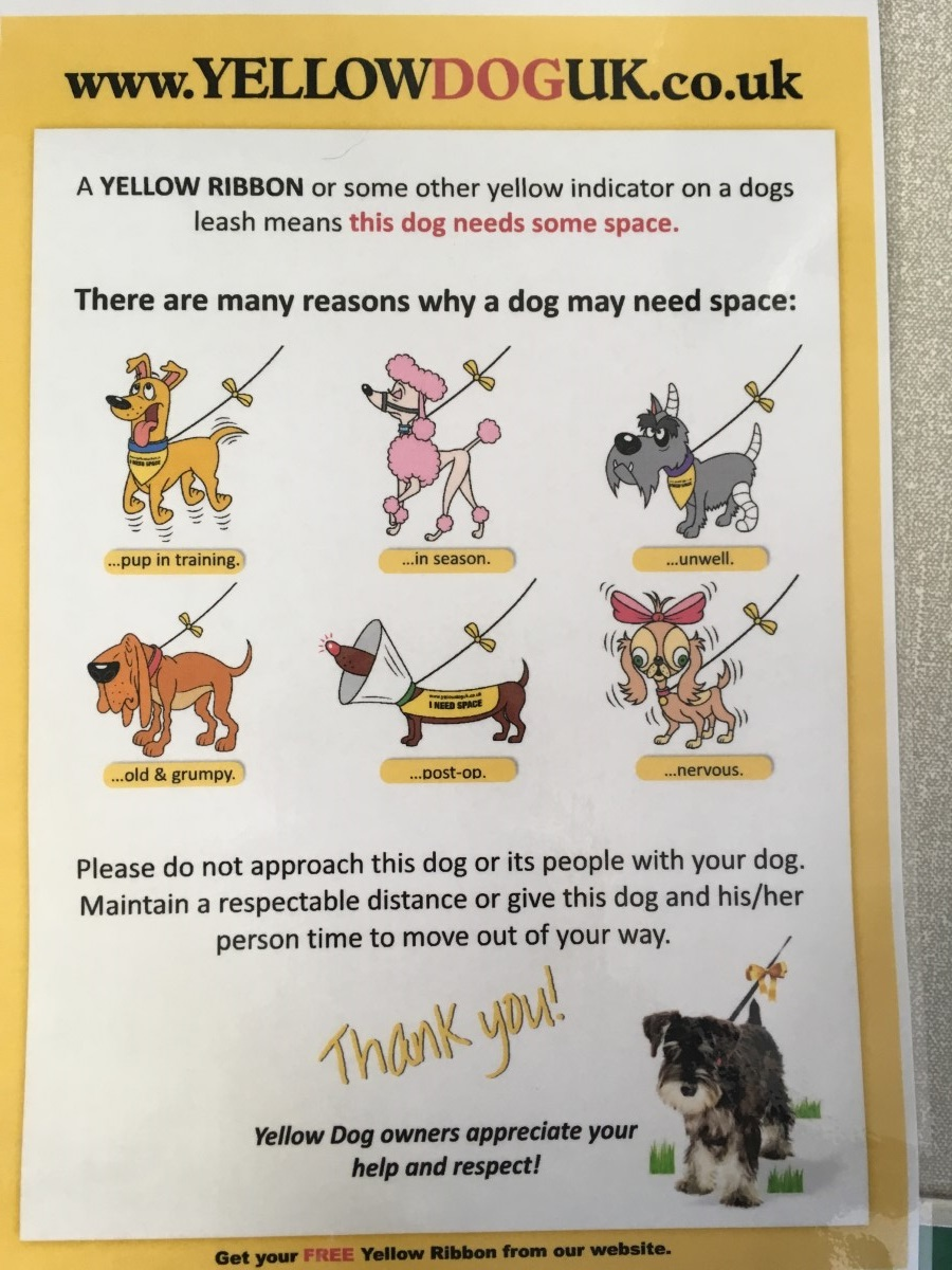 Poster Yellow Ribbon on Dogs
